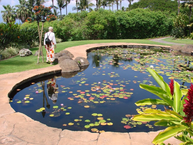 Cathy McDonald watching for fish in lily pond at Wailea Beach Resort, Maui. Photo by M. Maxine George