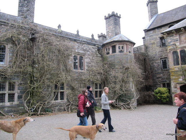 Judy Welford and her lurcher dogs escort her guests towards Gwydir Castle. Photo by M. Maxine George