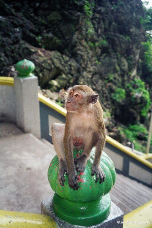 Monkey sitting on post at Malaysia's Batu Caves